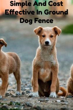 In Ground Dog Fence